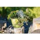 "Blumenampel ""Mareta"" 25 cm grün mit Kette"